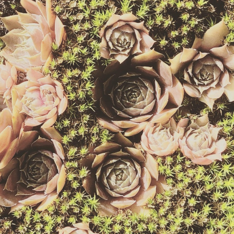 Zenhave - Koloritten © Kirsten K Kester